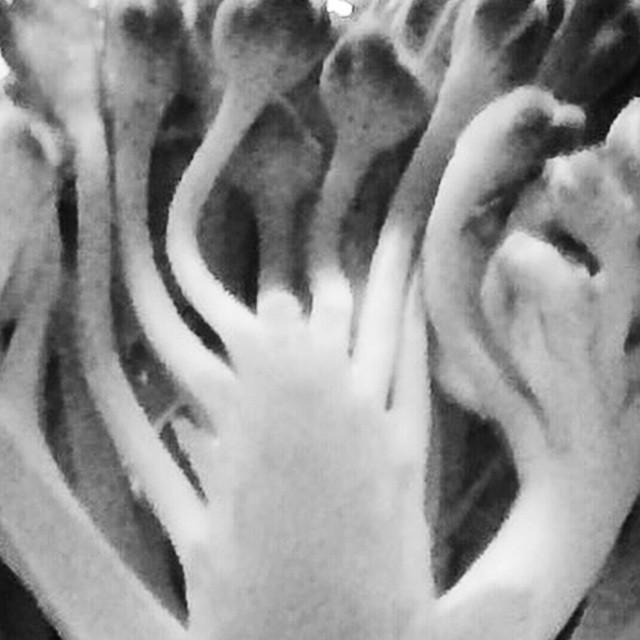 Just one more. #croppingbroccoli #abstractvegetables #thebeautyofvegetables #handsy