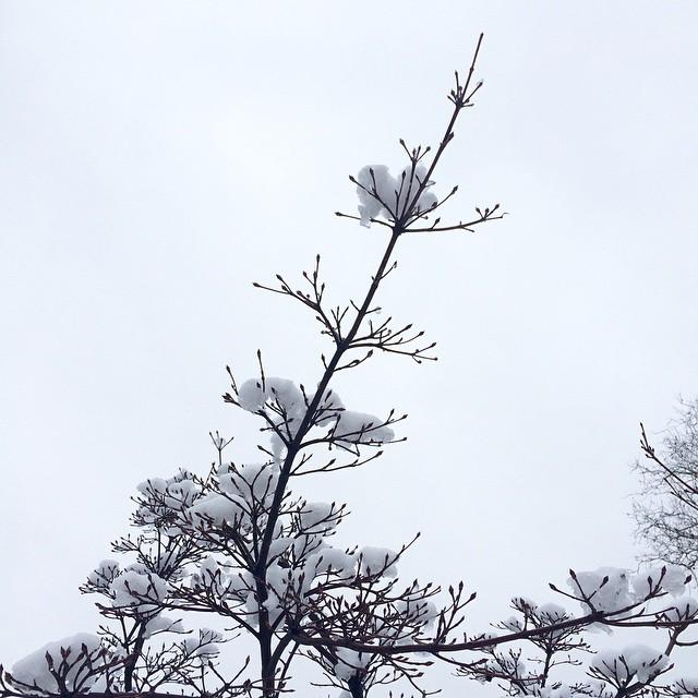 #snow #trees #whitesky #theskywhereIam