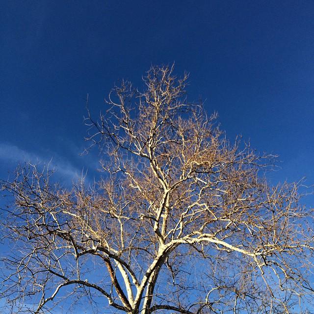 Jerome Avenue, Bronx, NY #theskywhereIam #trees #spring