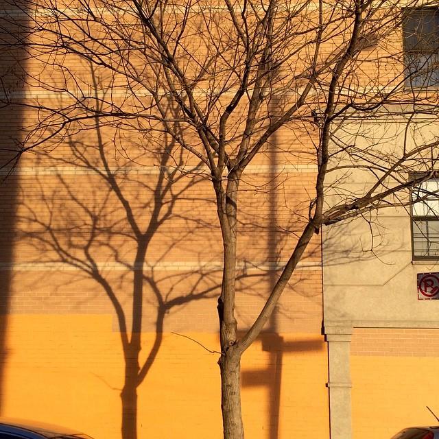 #Bronx