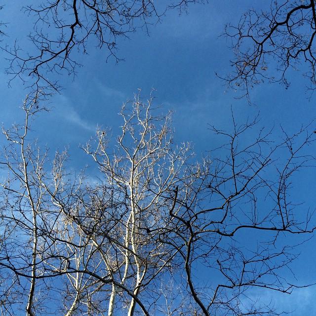 161st Street, Bronx, NY #theskywhereIam #spring #trees