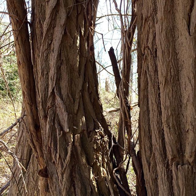 Hiking in Hartshorne's #springatlast #Ihaveacrushoneverytree #latergram